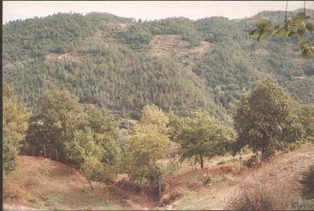 Imagem (4)