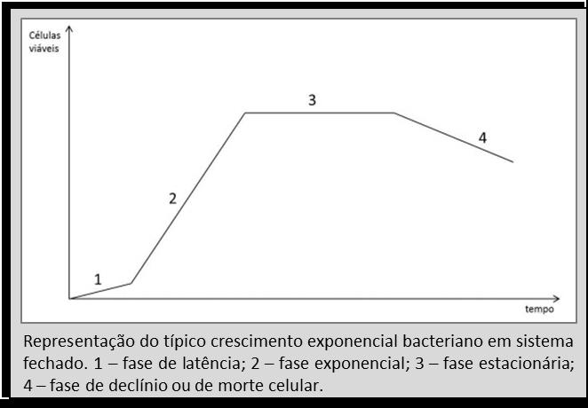 crescimento-bacteriano-01