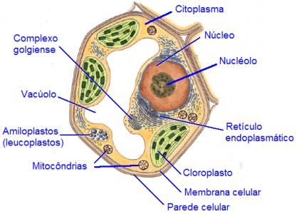 celula-vegetal