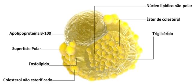 Lipoproteina