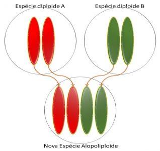Alopoliploide