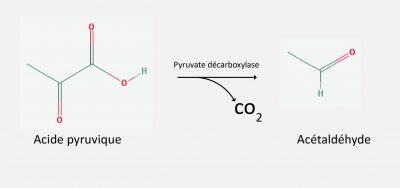 acido-piruvico-acetaldeidofr