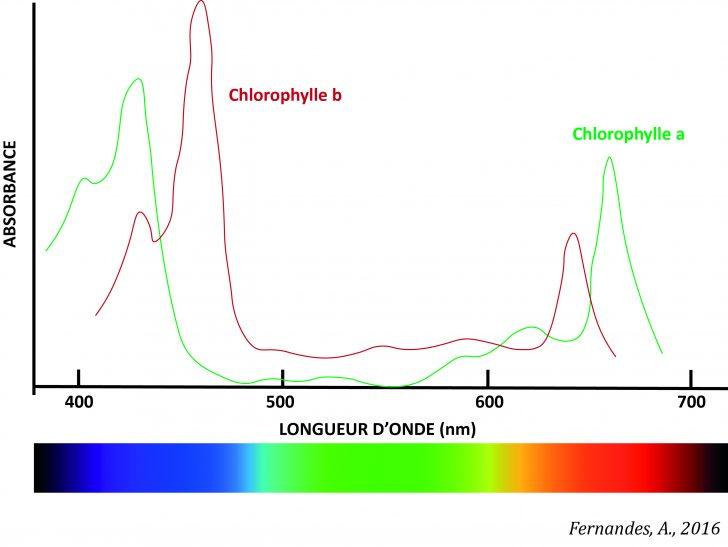 espectro-clorofilasfr