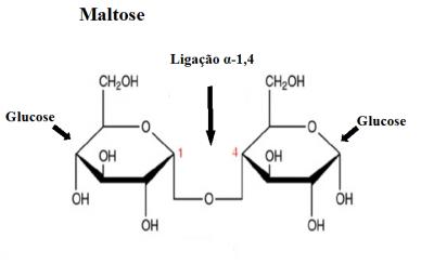 Figura 1 – Representação da estrutura química da molécula de maltose. Este dissacarídeo é formado por dois resíduos de glucose conectados por uma ligação glicosídica α-1-4.