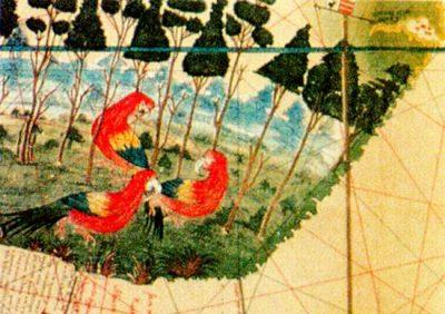 Mapa do Brasil , a Terra dos Papagaios- Cantino 1502