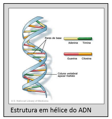 acido-desoxirribonucleico-adn-ou-dna-01