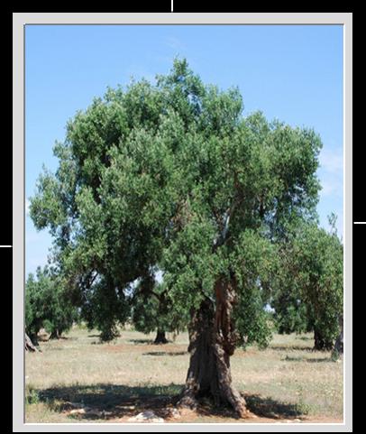 oliveira-01