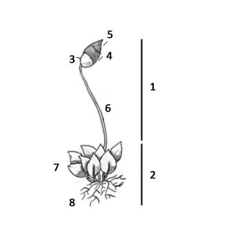Briofita