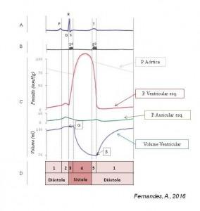 ciclo cardíaco PT