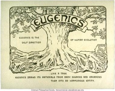 Árvore eugénica ou sobre a distorção da doutrina darwiniana sobre a sobrevivência do mais apto.