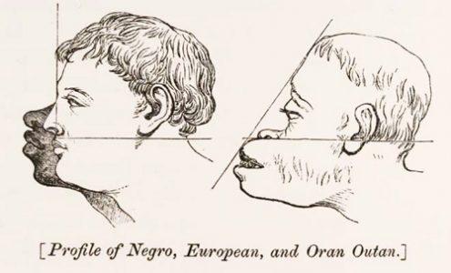 Os contornos gráficos que o racismo científico assumiu.