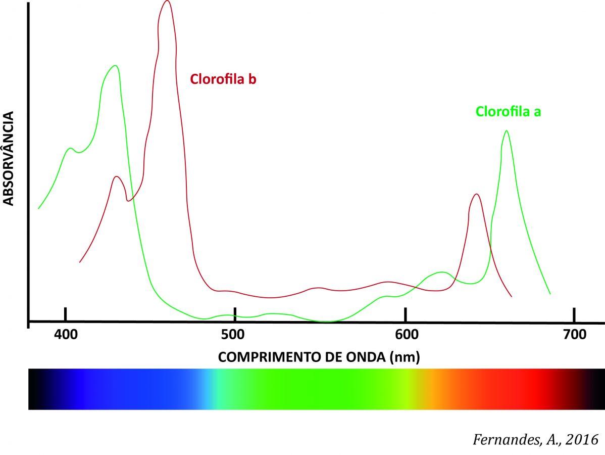 espectro-clorofilas