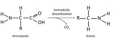 aminoacidos-descarbox