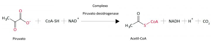 piruvato-acetilcoa