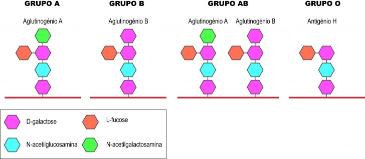 Aglutinogénio