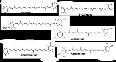Figura 1 – Representação da estrutura molecular do licopeno e de outros carotenóides para comparação, como o β-caroteno, a luteína, a zeaxantina, a cantaxantina e a astaxantina.