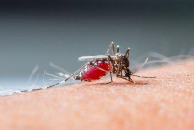 lista ranking top-10 epidemias mais mortais de sempre