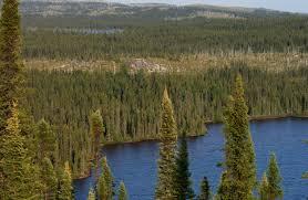 Flora boreal
